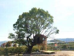 大阪にある宿泊できるツリーハウス